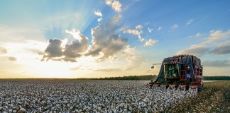 Mississippi export cotton
