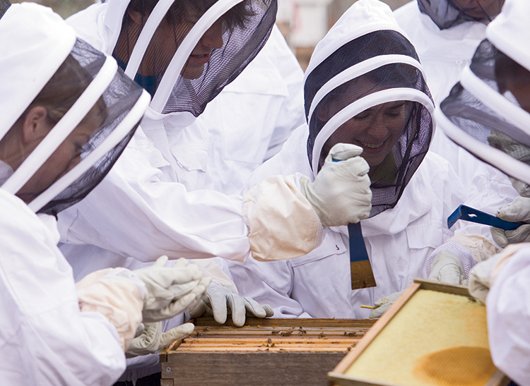 ohio state apiarist beekeeper training