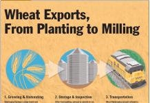 Nebraska Wheat Infographic