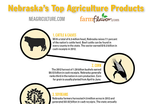 Nebraska S Top Agriculture Products Infographic Farm