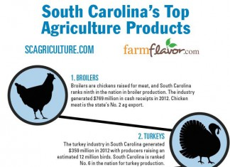 South Carolina Ag Top 10 Infographic featured