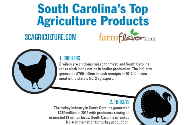 South Carolina Top Ten Agriculture Products Infographic Farm Flavor
