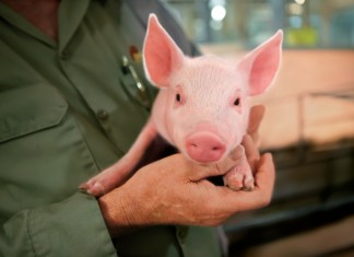 Oklahoma pork biosecurity