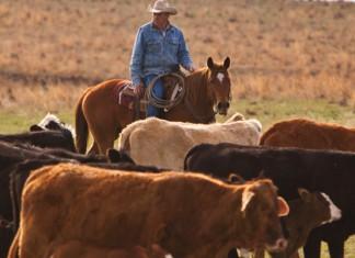 Oklahoma beef