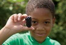 A child picks blackberries in McDonough, Georgia, Henry County.