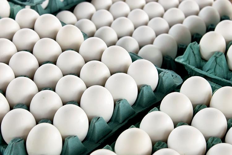 stock eggs