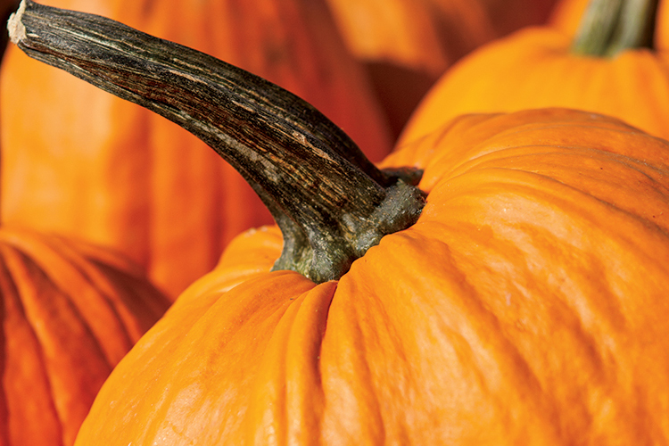 Raise Your Own Pumpkins Tips For Drying Saving And Planting Seeds Farm Flavor