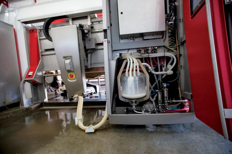 robotic milkers