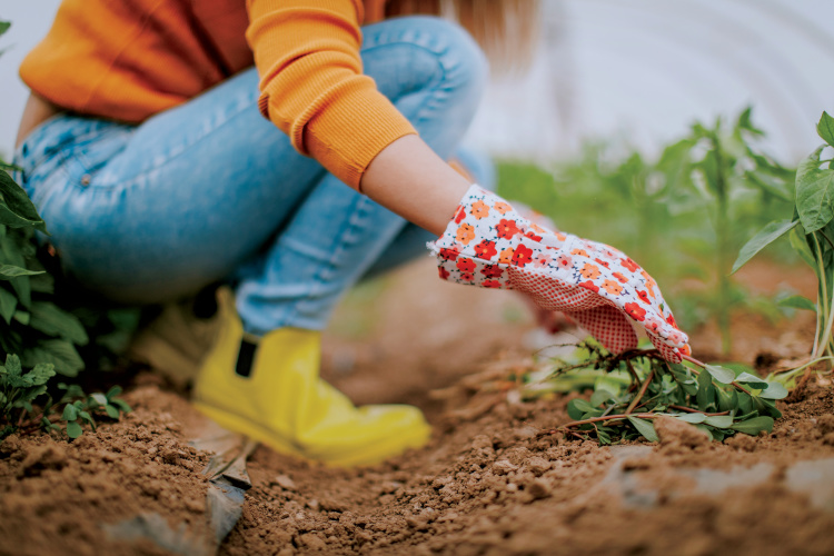 urban community gardens