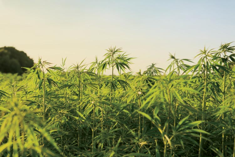 Connecticut Hemp Industry Association Works to Revive Rural Economy
