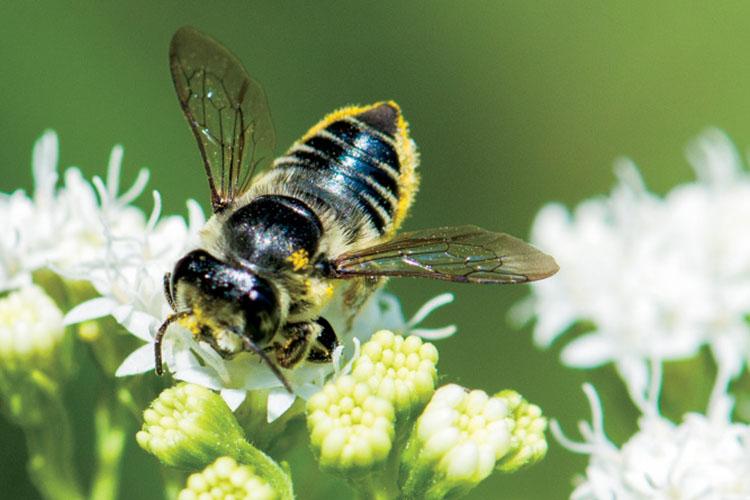 Wisconsin beekeeping