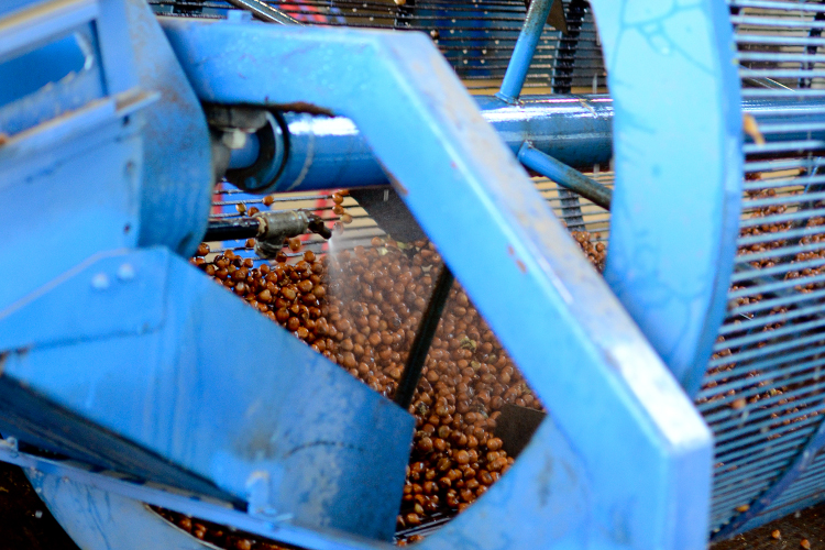 Oregon hazelnut industry
