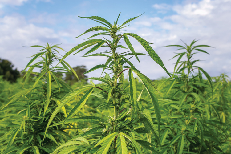 Young farmers diversify with new products, like hemp