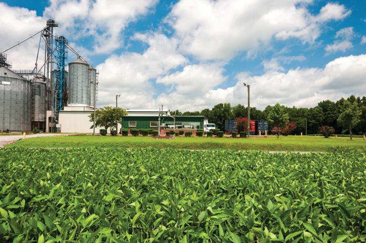 farmers advice; soybeans