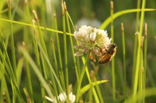 Tennessee honeybees