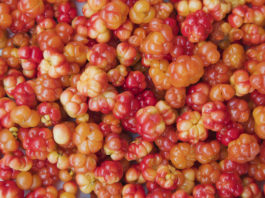 cloudberries