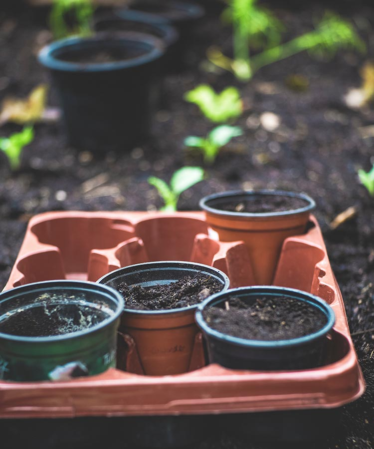 how to start a vegetable garden from seeds